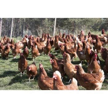 mit 21 % frischen Eiern aus Südtirol